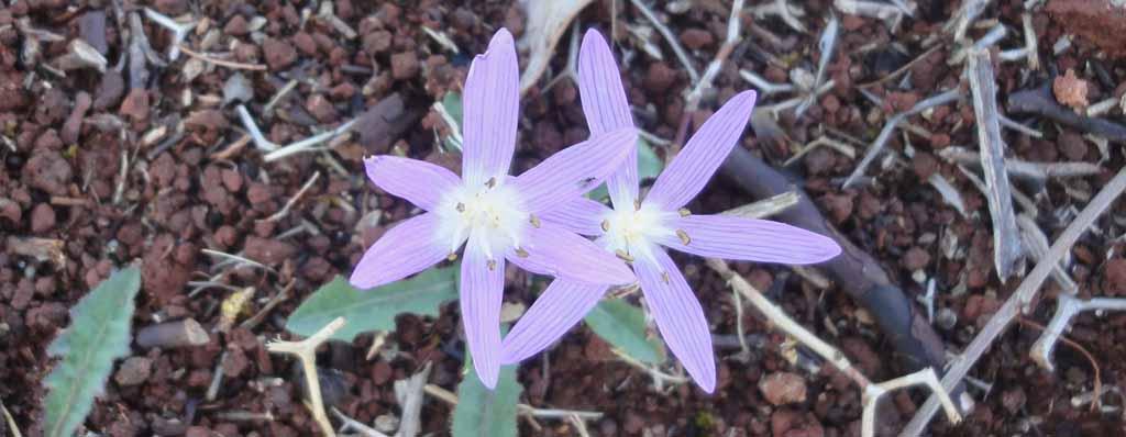 flower pink1